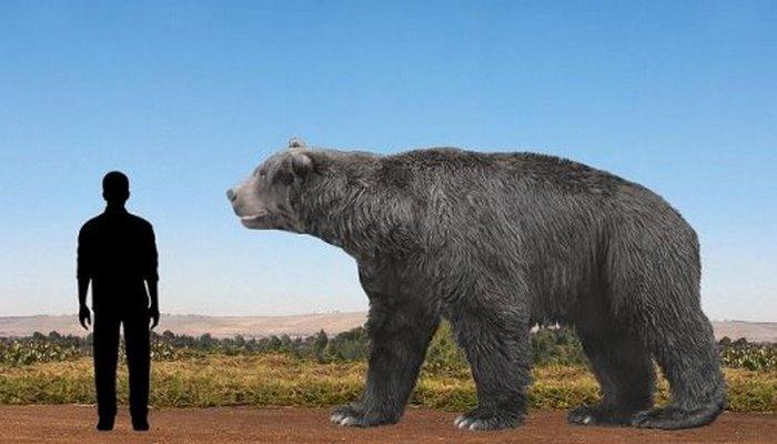 Ученые нашли останки самого большого медведя на Земле.