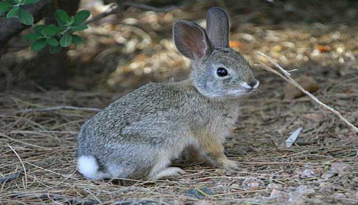 В Азербайджане задержаны браконьеры, охотившиеся на кроликов