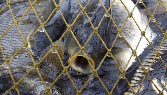 Минэкологии открыло сезон охоты на рыболовов-браконьеров