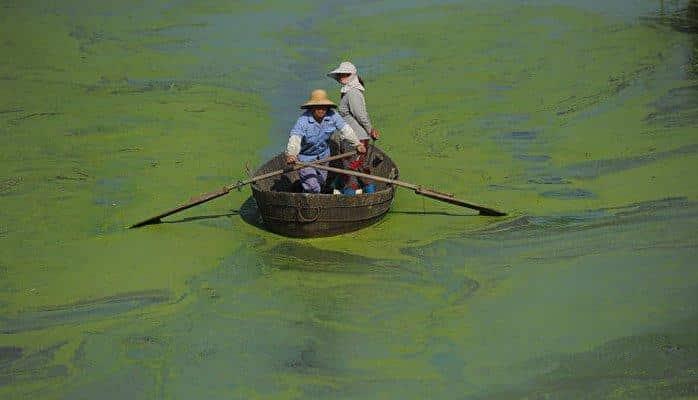 """Генетики раскрыли секрет токсичности """"зомби-водорослей"""""""