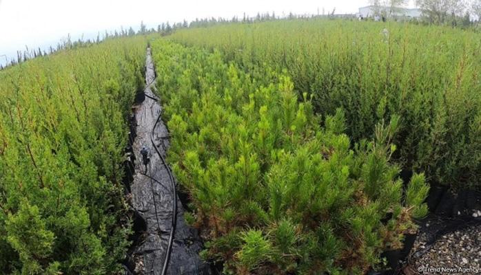 В Мушфигабаде стартовала посадка свыше 5 тыс. деревьев