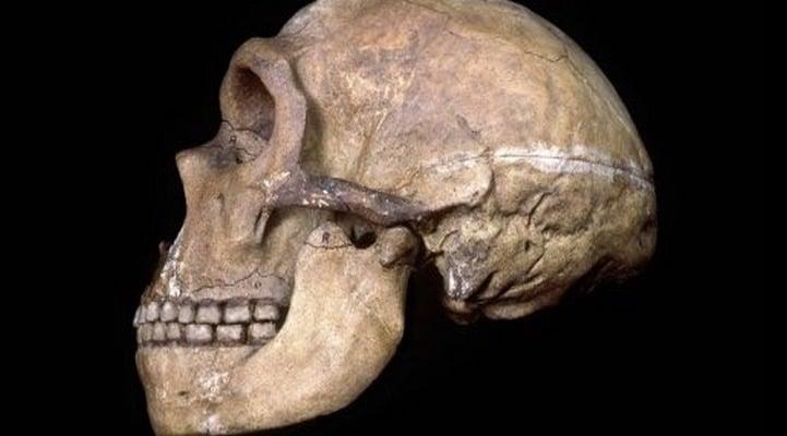 Предки человека могли употреблять твердые продукты, не повреждая зубы