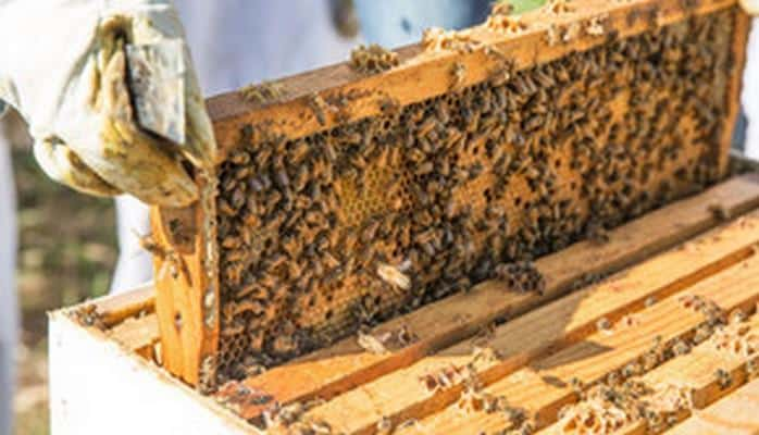 Кабмин утвердил правила выдачи субсидий лицам, занимающимся пчеловодством