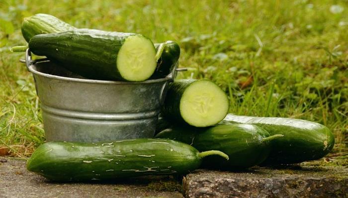 Эксперты рассказали о шести полезных свойствах свежих огурцов