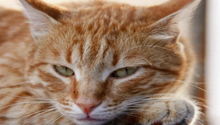 Почему кошек нельзя тянуть за хвост