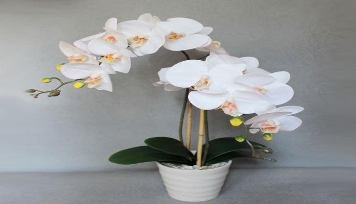 9 правил ухода за орхидеями