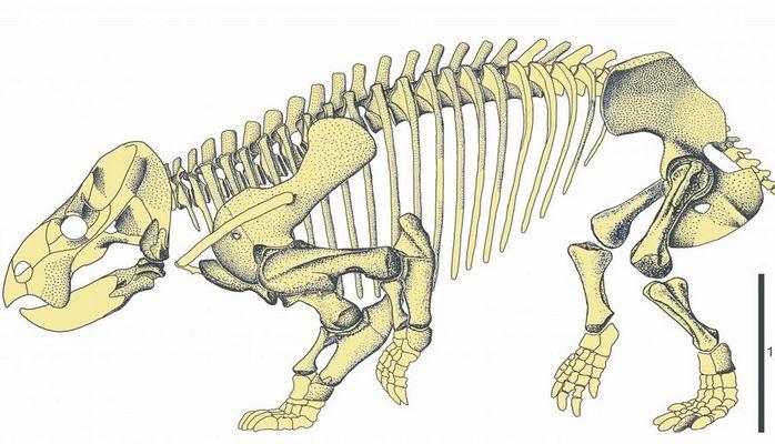 Древнейший предок человека был размером со слона и напоминал помесь носорога с черепахой
