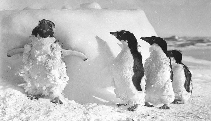 Зоологи обнаружили в Антарктиде сотни мумий пингвинов