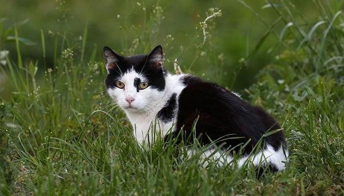 Для чего кошки едят траву