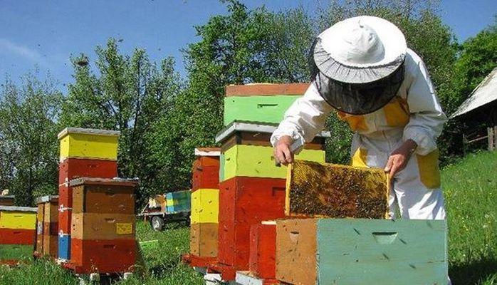 Озвучены сроки выдачи субсидий пчеловодам