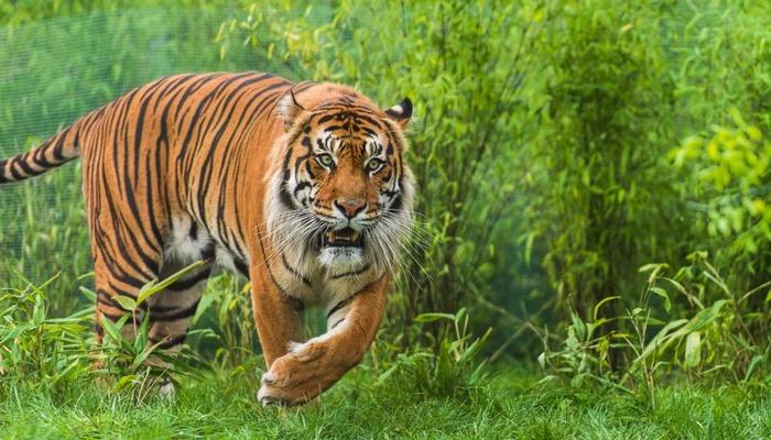 В немецком зоопарке могут начать кормить одних животных другими