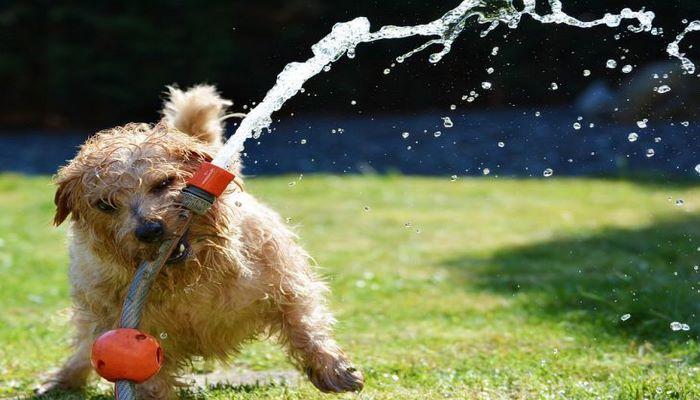 Как правильно ухаживать за собакой летом: советы эксперта