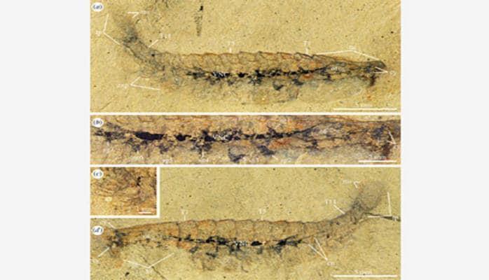 Найдены останки существа с древнейшим мозгом