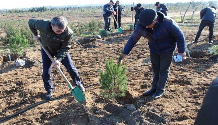 SOCAR əməkdaşları 100 min ağac əkdi