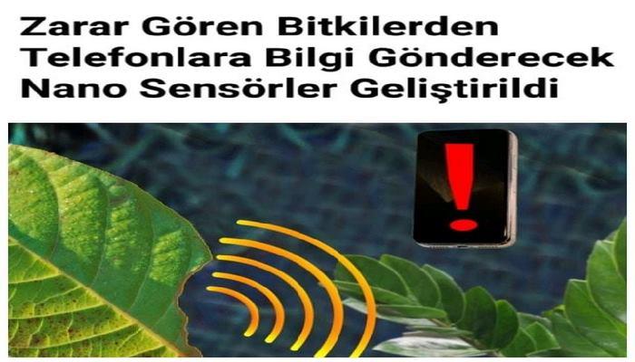 Zarar Gören Bitkilerden Telefonlara Bilgi Gönderecek Nano Sensörler Geliştirildi