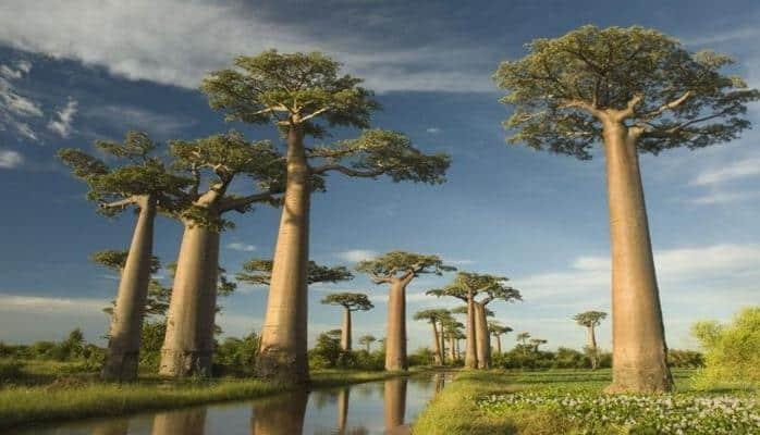 10 необычных деревьев