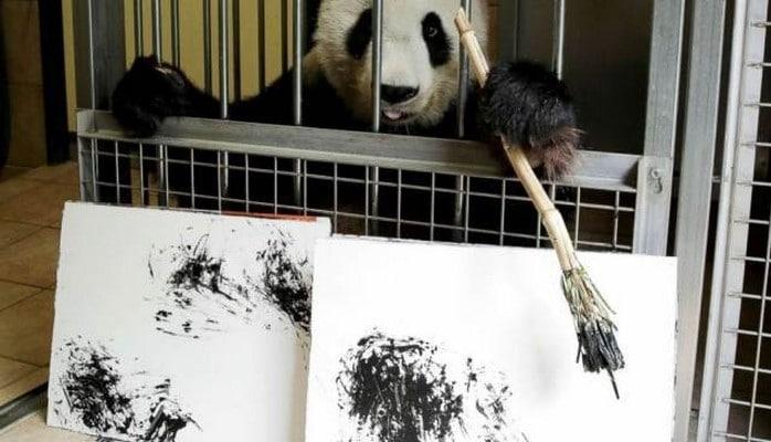 Avstriya zooparkında panda rəsm çəkməyi öyrənib