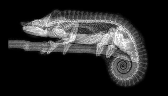 Рентгеновские снимки животных заворожили интернет