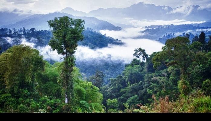 Yeni kəşf - Amazon cəngəllikləri yağışa səbəb ola bilir