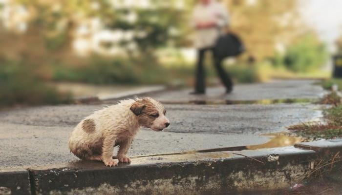17 августа - Всемирный день бездомных животных