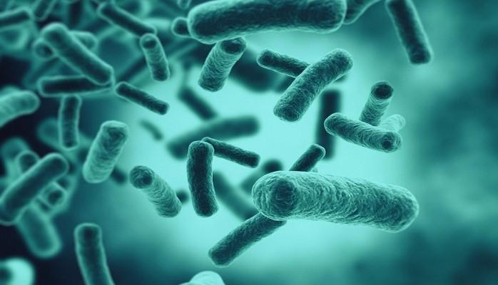 Найдена новая опасность бактерии Хеликобактер пилори