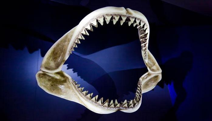 Ученые назвали самых зубастых животных