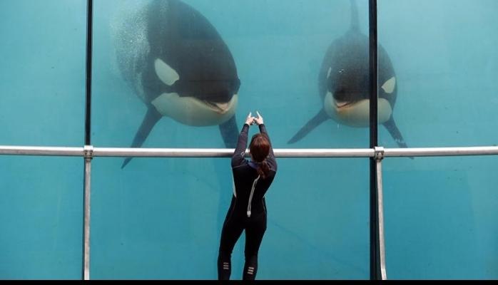 Danışan balinalar