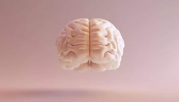 Bu şəxslərdə beyin daha kiçikdir