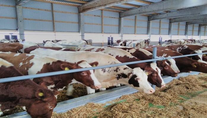 Агентство пищевой безопасности об опасности ввоза скота из РФ
