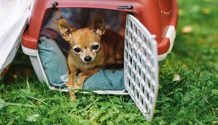 Названы самые дорогие города для собак