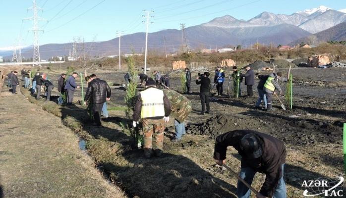 В Гахском районе продолжается акция по высадке деревьев
