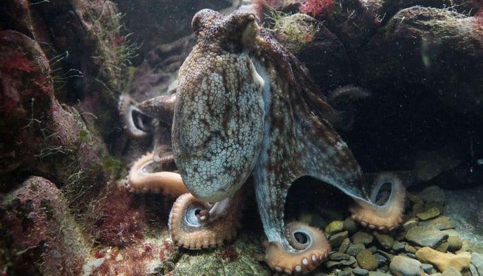 Ученые нашли применение искусственной кожи осьминога