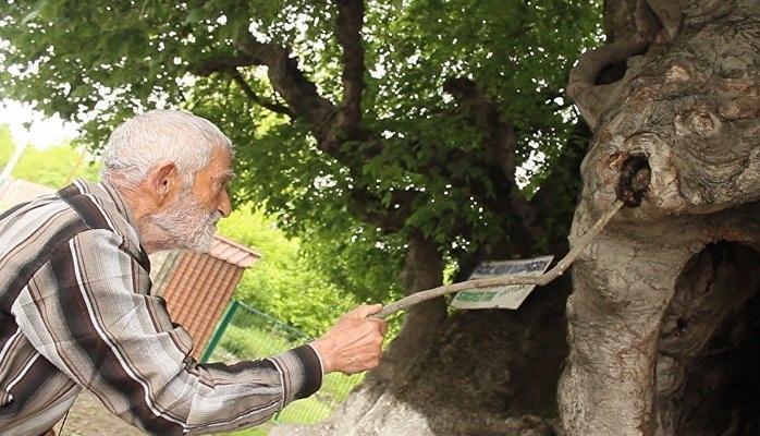 Священное дерево в селе Катех стало местом поклонения сотен людей