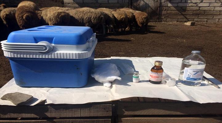 Абшеронский полуостров будет объявлен зоной, свободной от заболеваний животных