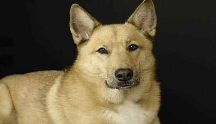 Ученые выяснили, как меняется характер собаки с возрастом