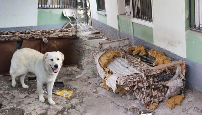Köpeğin bulduğu altınların sahibi aranıyor