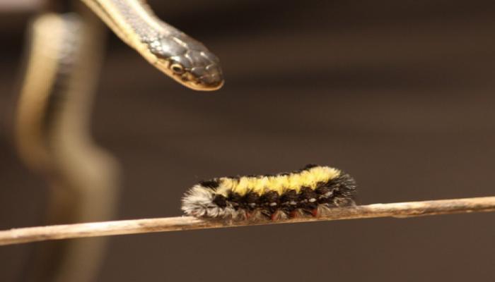 Ученые раскрыли секрет необыкновенной остроты клыков гадюки