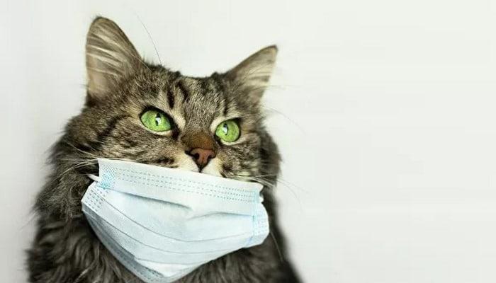 Ученый рассказал, почему люди не заражаются коронавирусом от питомцев