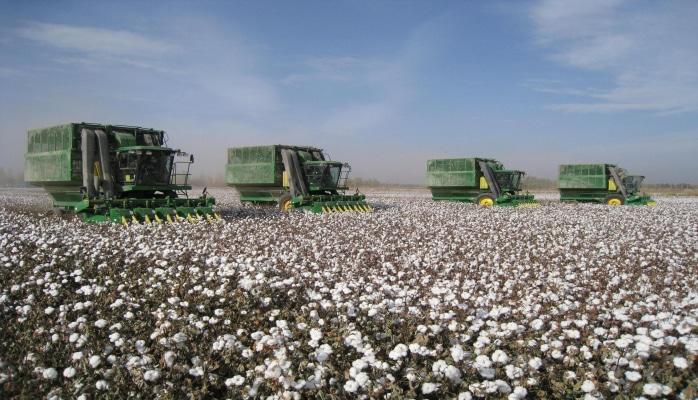 В Азербайджане выросла урожайность хлопка