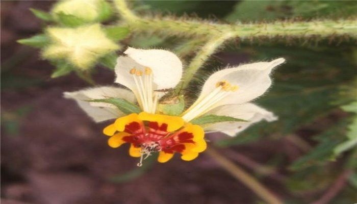 Бихевиористы нашли в Андах цветок, обладающий памятью навыками.