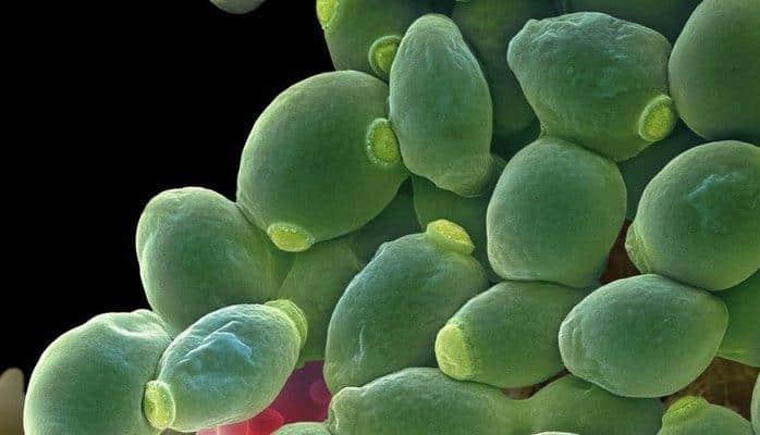 Как сделать дождевую воду бактерицидной