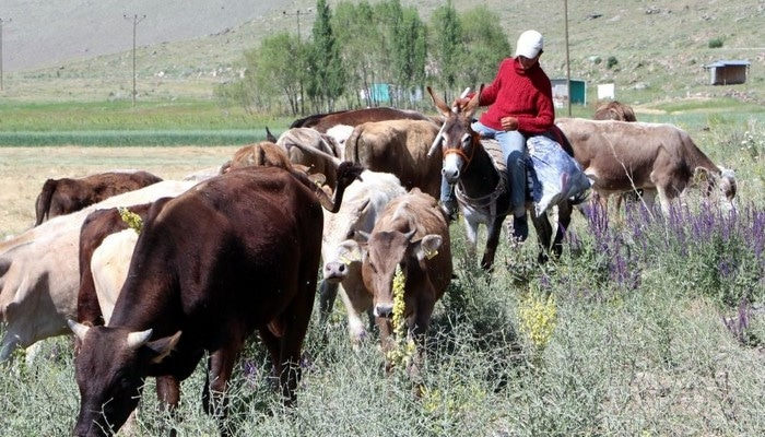 Çobanlardan Erzurum Valisi Memiş'e teşekkür: Sadece çoban çobana kız veriyor