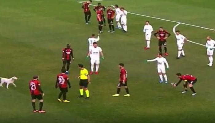 Türkiyədə futbol matçında it meydana daxil olaraq topla oynamağa başlayıb