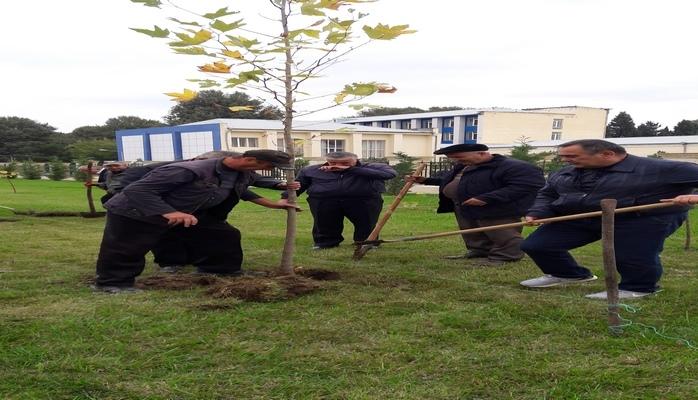 ADAU-da Prezident İlham Əliyevin fəaliyyətinin 15 illiyi ilə əlaqədar ağacəkmə kompaniyası keçirilib