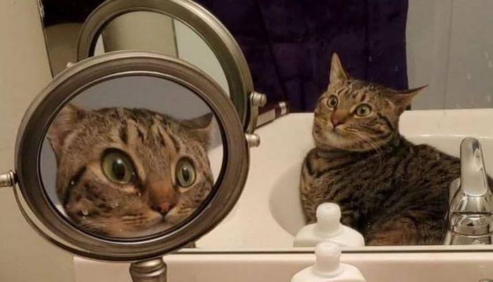 Шокированный кот восхитил пользователей Сети