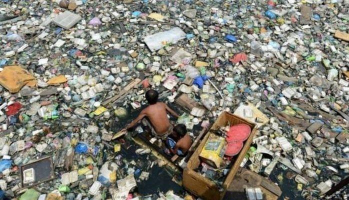 Plastik yeyən zibillik göbələyi dünyanı necə xilas edə bilər?
