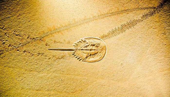 Ученые нашли в Китае останки древнейшего монстра