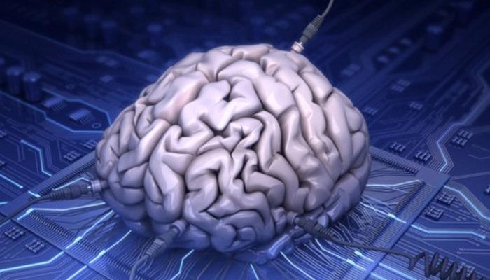 Учёные сообщили, что выращенный в лаборатории мини-мозг проявил нейронную активность .