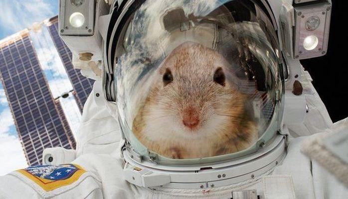 Мыши станут первыми пассажирами на новом лунном корабле