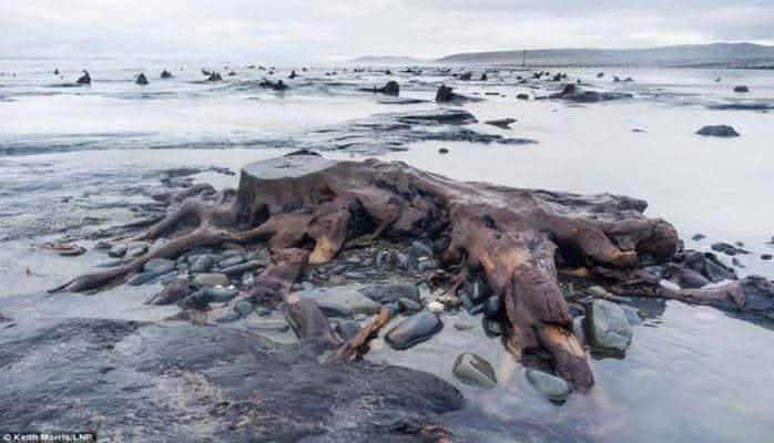 В Великобритании обнаружен лес возрастом в 5 000 лет
